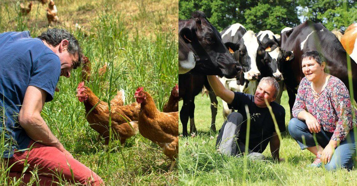 Élevage ovin et bovin bio et équitable en France
