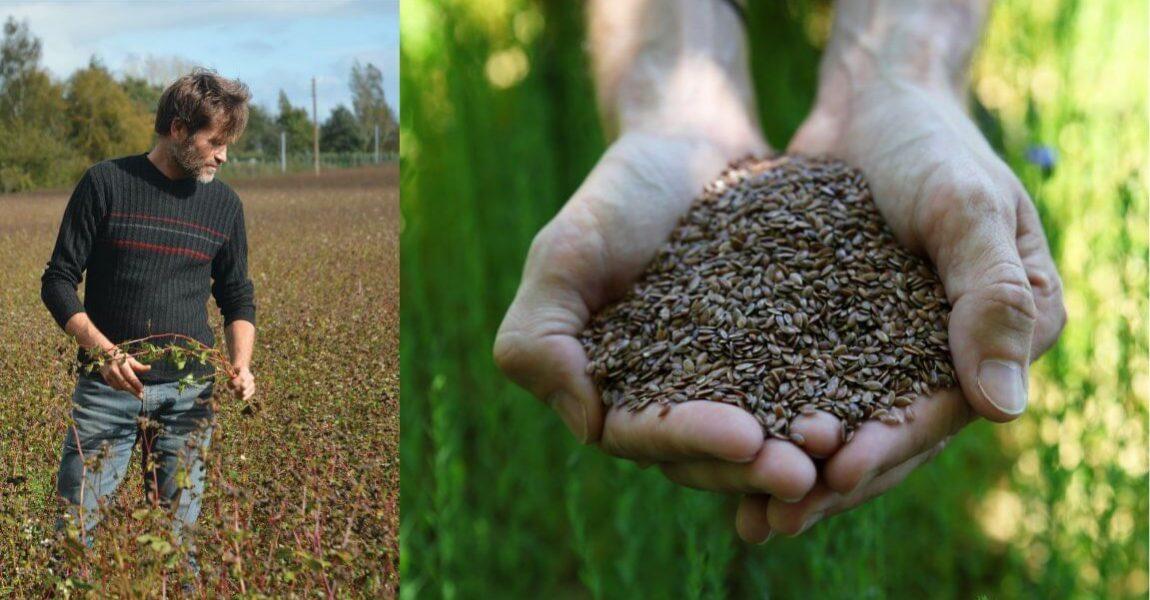 Agriculture céréalière bio et équitable en France, culture de blé noir