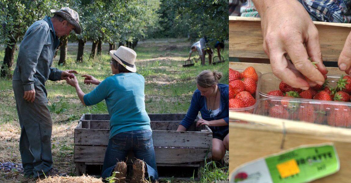 Agriculture maraichère bio et équitable en France